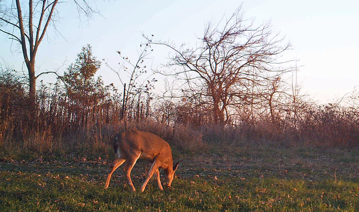 Iowa DNR to host chronic wasting disease meetings Oct. 11 in Harpers Ferry and Waukon and Oct. 17 in